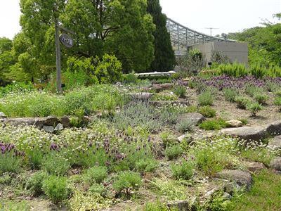 春日井市都市緑化植物園3