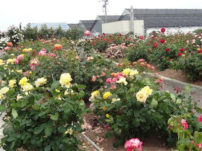 西尾市憩いの農園2
