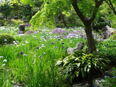 諸戸氏庭園3