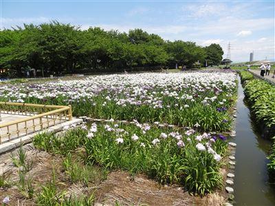 庄内緑地公園9