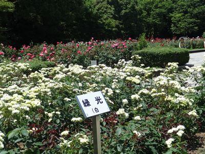 庄内緑地公園4