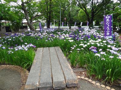 油ヶ渕花しょうぶ園1