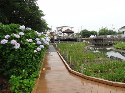 堀川花しょうぶ園1