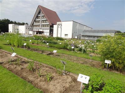 内藤記念くすり博物館1