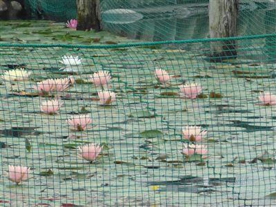 おがせ池2