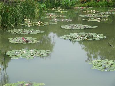 浜名湖ガーデンパーク9