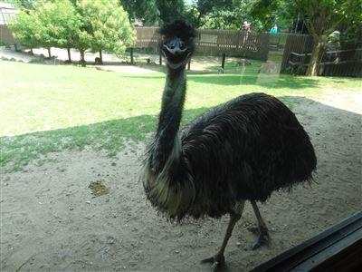 豊橋動物園3