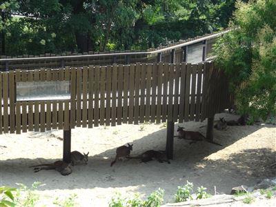 豊橋動物園4