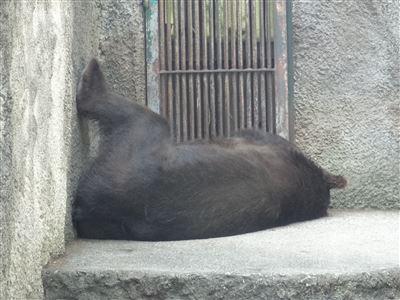 豊橋動物園5