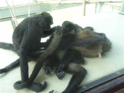 豊橋動物園6