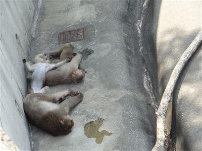 豊橋動物園9
