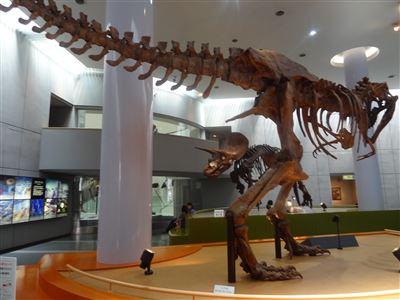 自然史博物館1