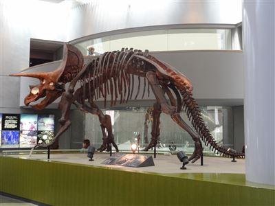 自然史博物館2