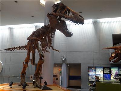 自然史博物館4