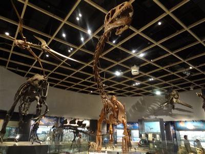 自然史博物館5