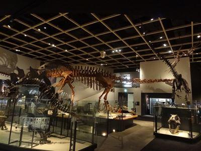 自然史博物館6
