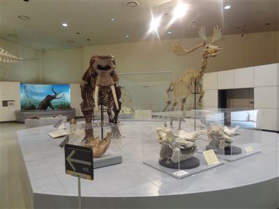 自然史博物館7