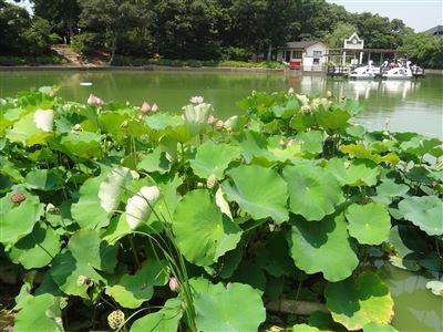 豊橋植物園6