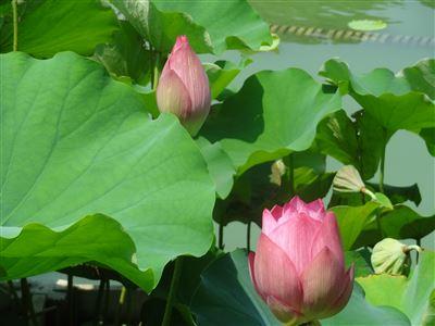 豊橋植物園7