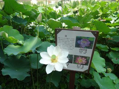 豊橋植物園9