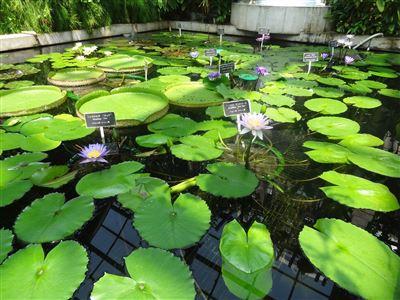 豊橋植物園12