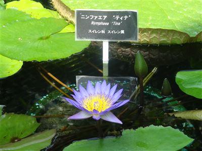豊橋植物園13