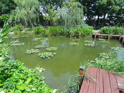 豊橋植物園3