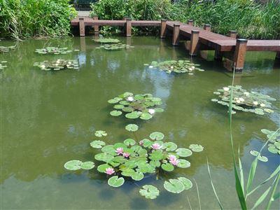豊橋植物園4
