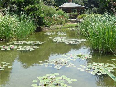 豊橋植物園5