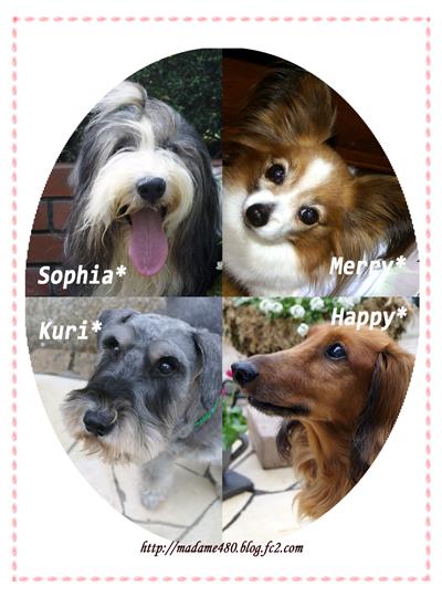 犬4匹庭額web用