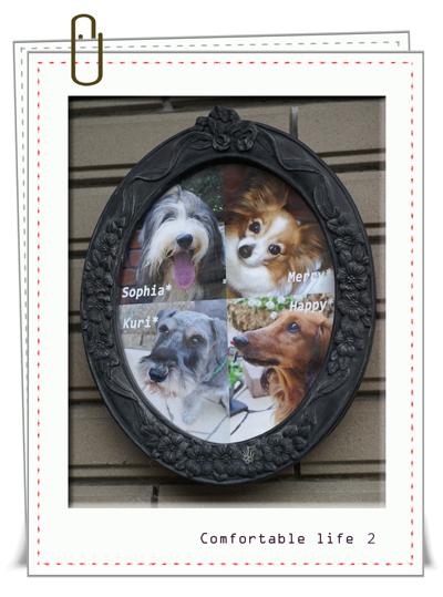 犬4匹庭額web用B