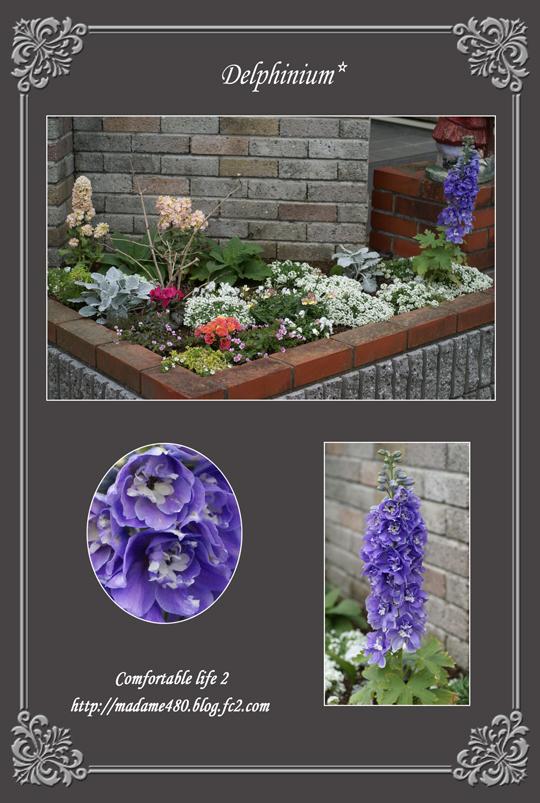 デルフィニウムの花壇web用