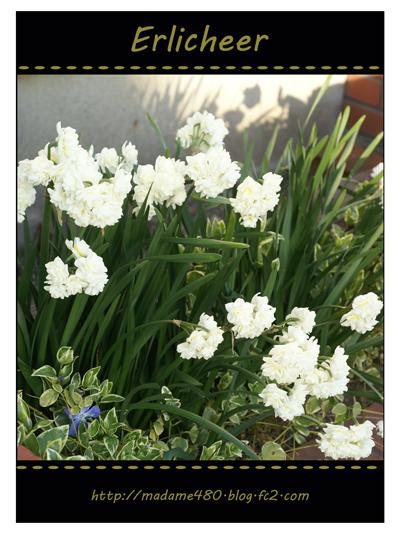 エルリッチャー西側花壇web用B