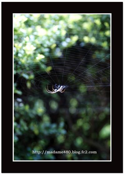 クモの巣web用