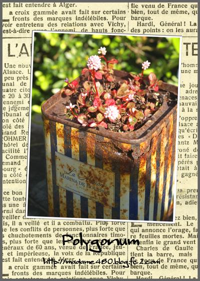 ポリゴナム紅茶缶web用2014