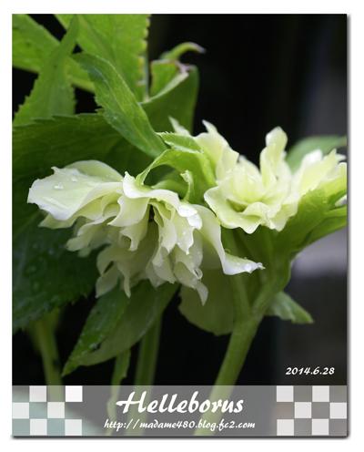 クリロー6月花web用