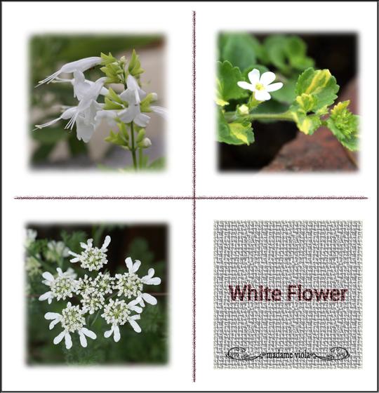白花3種web用7月