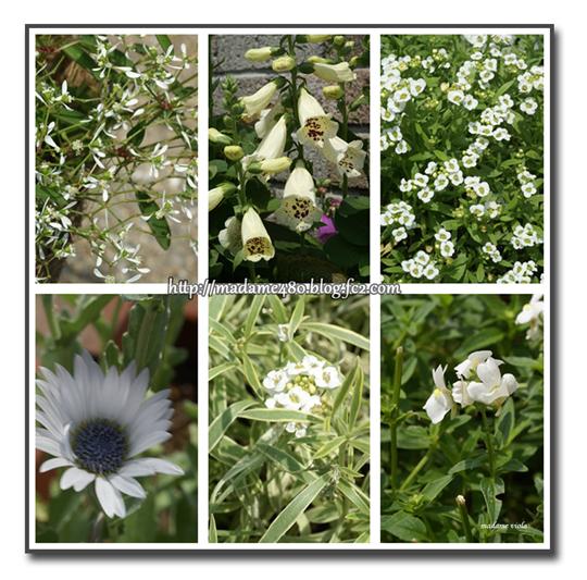 白花6種web用7月