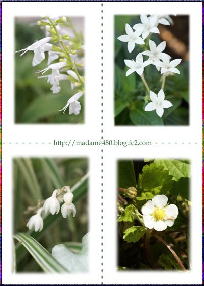 白い花web用Aok