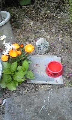 ワンコちゃんのお墓