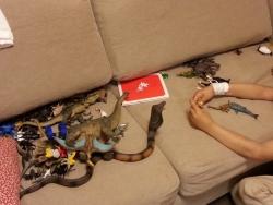 恐竜vs恐竜、或いは恐竜vs蛇で対決させて遊んでいます