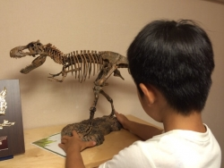 ティラノザウルス Rex スケルトン