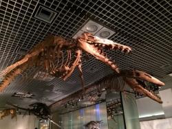 上野の国立科学博物館 恐竜