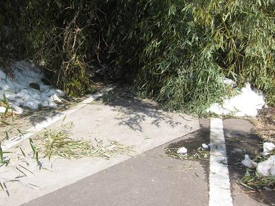 IMG_2212 ⑩覆いかぶる竹