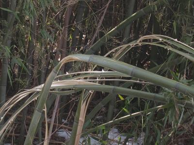 IMG_2230 ⑩割れた竹