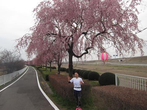IMG_2339 ⑫コース沿い枝垂れ桜