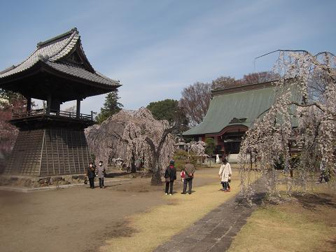 nIMG_2333 ⑫慈眼寺の枝垂れ桜