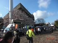 14日本平桜マラソン3