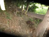 IMG_2806 ④倒木の潜り抜け