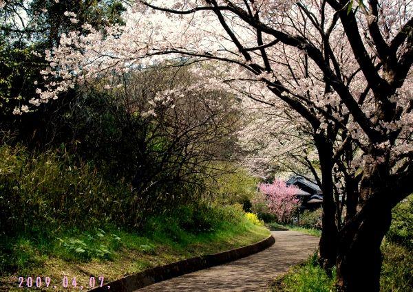 粟島散歩 115 (600x425)